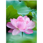 DIY 5D Diamond Painting by Number Kit Lotus Flower Diamond Embroidery Cross Stitch Arts Craft Supply..