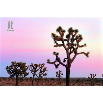 Diy Diamond Embroidery A Forest Of Joshua Trees Diamond Painting Rhinestone Painting Cross Stitch Needlework Home Decoration
