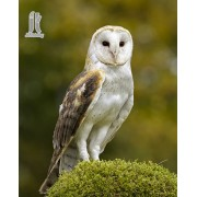 Diy Diamond Embroidery Barn Owl Diamond Painting Rhinestone Painting Cross Stitch Needlework Home De..