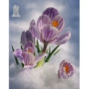 Diy Diamond Embroidery Blooming Saffron Diamond Painting Rhinestone Painting Cross Stitch Needlework..