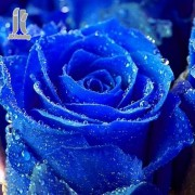 Diy Diamond Embroidery Blue Rose Diamond Painting Rhinestone Painting Cross Stitch Needlework Home D..