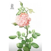 Diy Diamond Embroidery Chinese Rose Diamond Painting Rhinestone Painting Cross Stitch Needlework Hom..