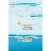 Diy Diamond Embroidery Polar Bear In Greenland Diamond Painting Rhinestone Painting Cross Stitch Nee..
