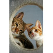 Diy Diamond Embroidery Two Cute Cats Diamond Painting Rhinestone Painting Cross Stitch Needlework Ho..